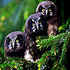 Three owl slide puzzle