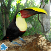 Toucan Jigsaw Puzzle