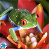 Tree Frog Jigsaw Puzzle