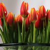 Tulips Jigsaw