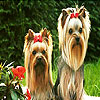 Two cute dogs slide puzzle