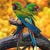 Two parrots slide puzzle