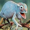 Ugly iguana slide puzzle