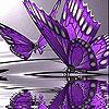 Violet butterflies slide puzzle