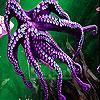 Violet octopus slide puzzle