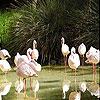 White flamingos slide puzzle