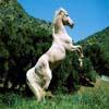White Horse Sliding