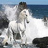 White wild horse slide puzzle