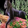 Wild black cat puzzle
