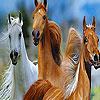 Wild horses slide puzzle
