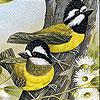 Woodland birds slide puzzle
